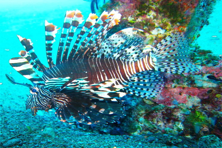 images tradition culture beach -lion fish