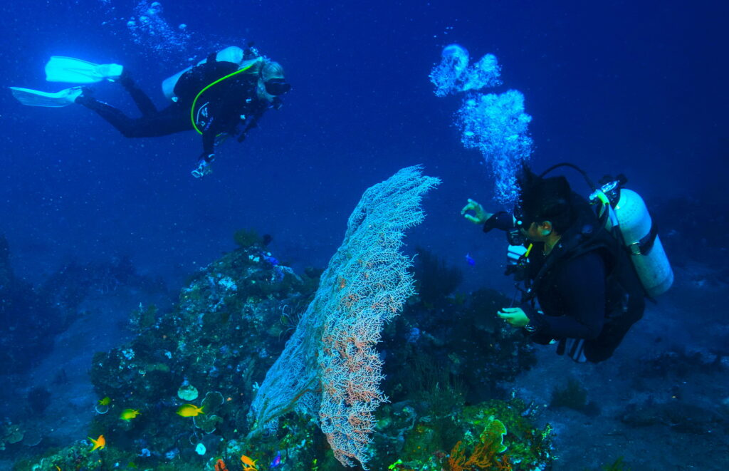 Snorkeling, Scuba Diving & Dive Courses at Tulamben wall