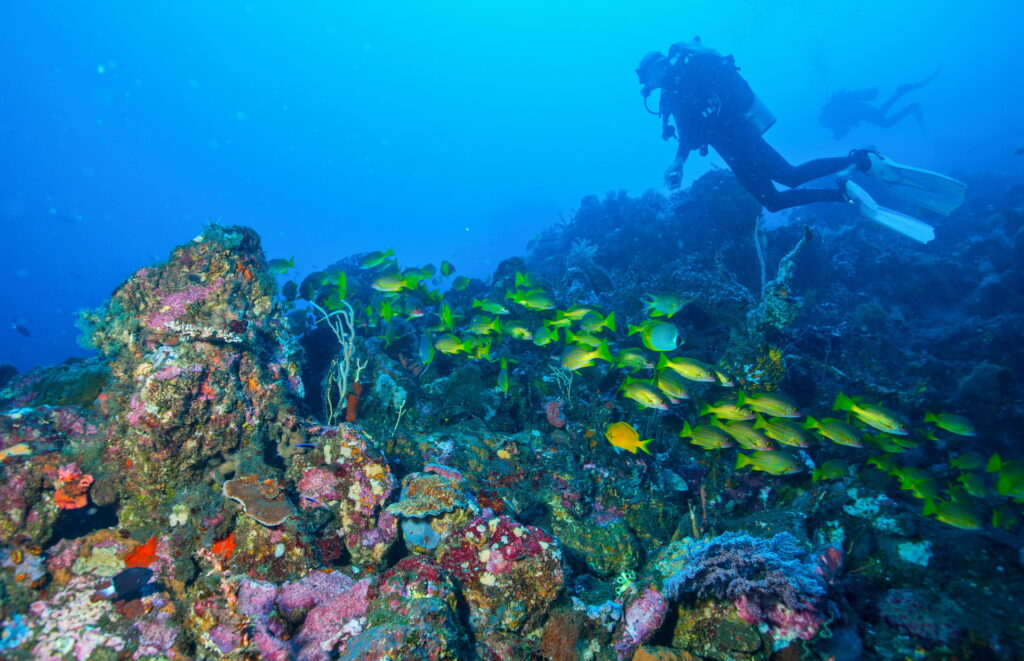 Snorkeling, Scuba Diving & Dive Courses at Amed little wall