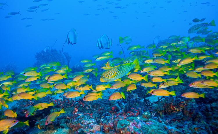 school of fish at ship wreck