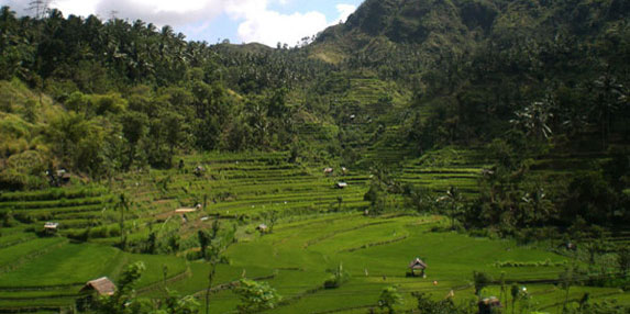 Transfer Touren Ausflüge Sehenswürdigkeiten Reisterrassen in Bali