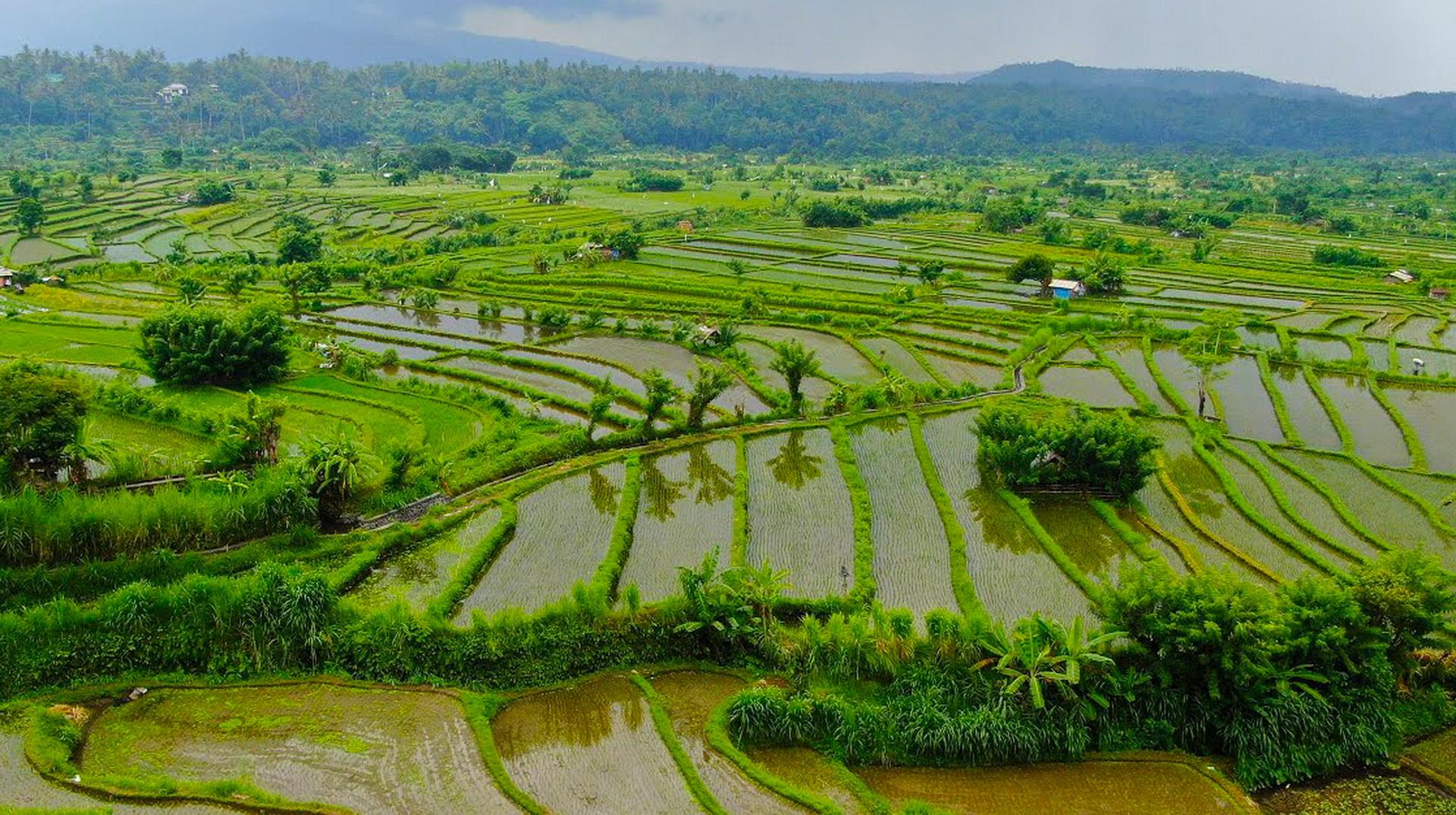 Rice Terrace Amed Bali